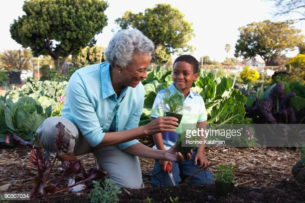 african grandmother gardening with grandson - kneeling stock pictures, royalty-free photos & images