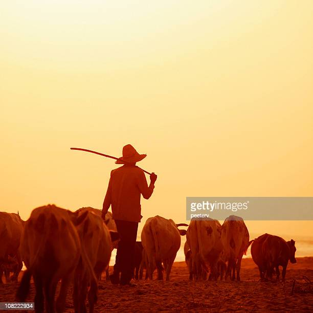african herdsman - fulani stock photos and pictures
