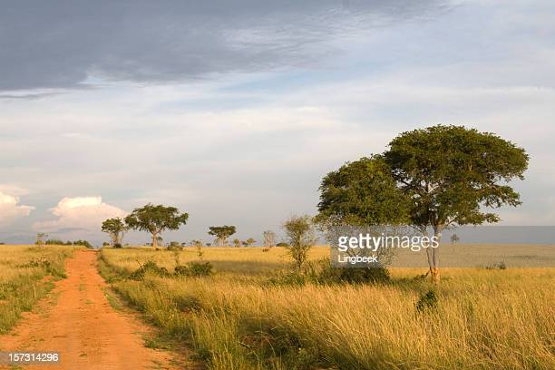 african landscape in uganda - uganda stock pictures, royalty-free photos & images