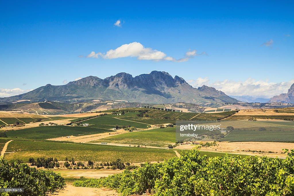 African Landscape Vineyard Region Stellenbosch South Africa : Stock Photo