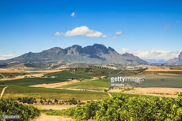 african landscape vineyard region stellenbosch south africa - western cape province stock pictures, royalty-free photos & images
