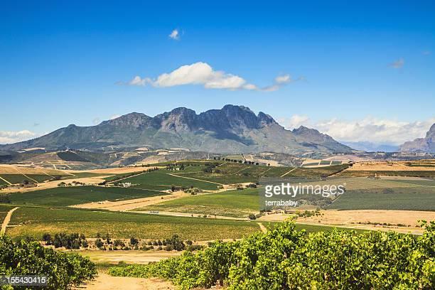 African Landscape Vineyard Region Stellenbosch South Africa