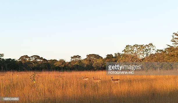 Paisaje de África con Antilopes