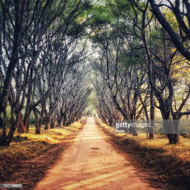 african landscape with dirt road and  jacaranda trees in wintertime - jacaranda tree stock pictures, royalty-free photos & images