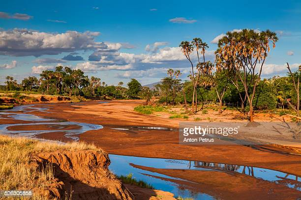 African landscape with palm trees on the river bank