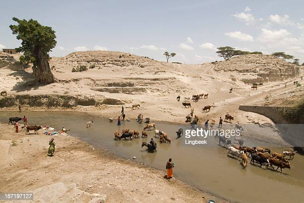 african life at the river - drought stock pictures, royalty-free photos & images