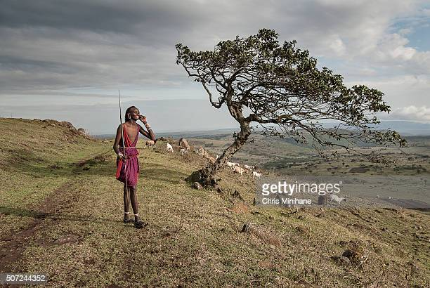 african maasai man speaks on a cell phone. - warrior person stock photos and pictures