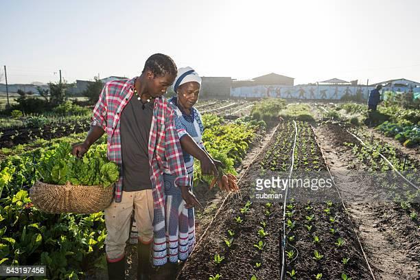 Afrikanische männlichen Erwachsenen und Frau zeigt auf Gemüse im Garten