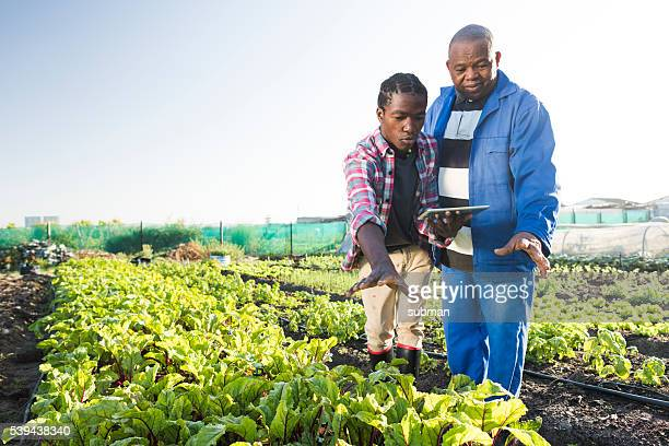 African males using tablet in vegetable garden