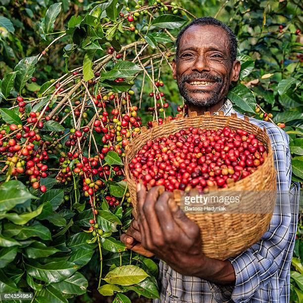 Homme africain collecte cerises de café Orient et en Afrique