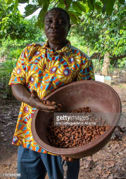 African man with dried cocoa beans Région des Lacs Yamoussoukro Ivory Coast on May 7 2019 in Yamoussoukro Ivory Coast