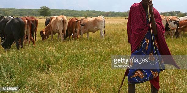 african masai pastor de vaca - eden pastora fotografías e imágenes de stock
