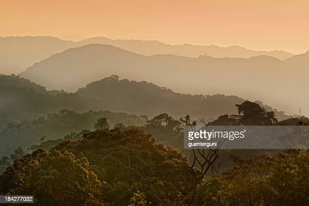 African morning - first daylight in a tropical cloud forest
