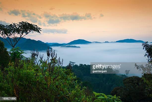 African morning - first daylight in the rainforest, Rwanda