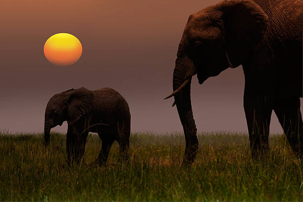 African Mother Elephant And Baby - Sunset Wall Art