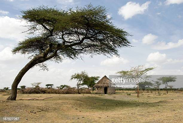 African mud hut under an acacia tree