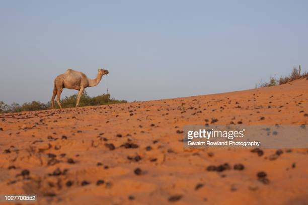 african nature, senegal - dunes arena stock pictures, royalty-free photos & images
