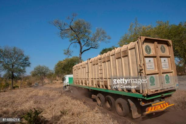African Parks officials transport elephants from Majete Game Reserve southern Malawi to Nkhotakota in the central region on July 14 2017 500...