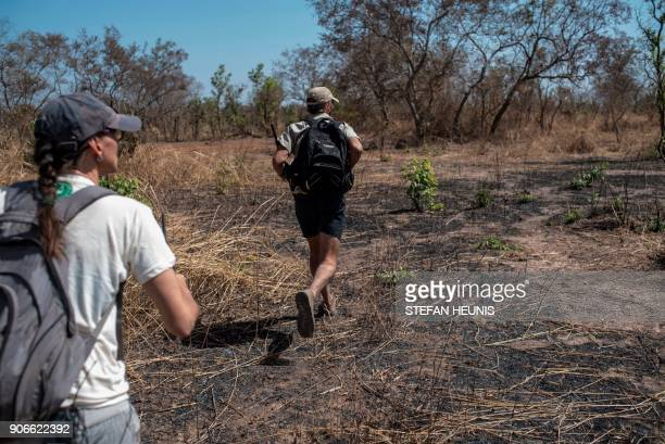 African Parks special projects manager Marketa Antononova and veterinarian Pete Morkel runs after a tranquillized elephant during an elephant...