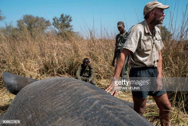 African Parks veterinarian Pete Morkel stands next to a tranquillized elephant during a collaring exercise at Pendjari National Park near Tanguieta...
