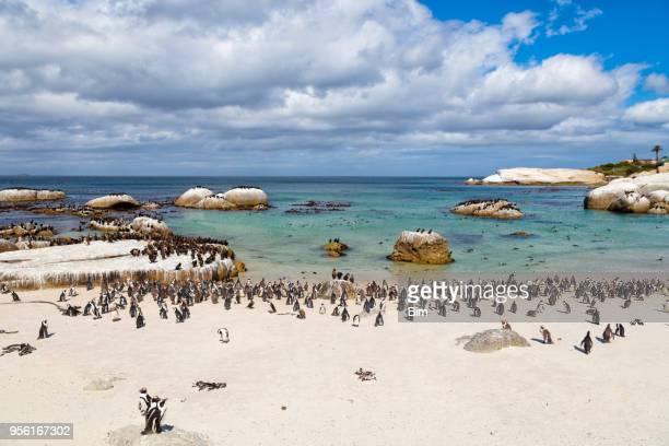 Afrikanische Pinguine Kolonie bei Boulders Bay in Südafrika