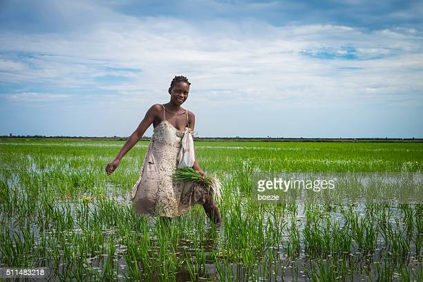African Rice Farmer