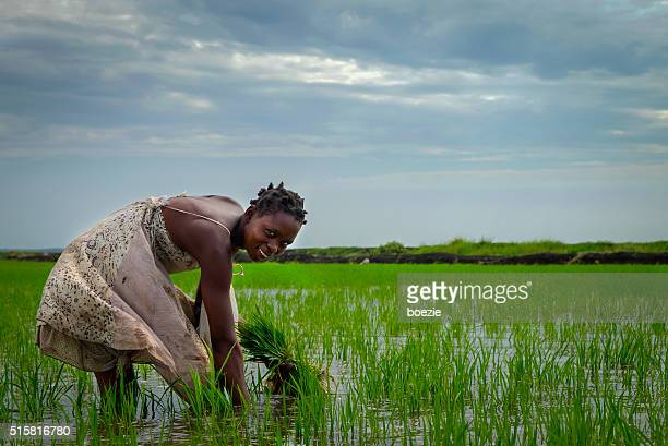 african rice farmer - mozambique stock pictures, royalty-free photos & images