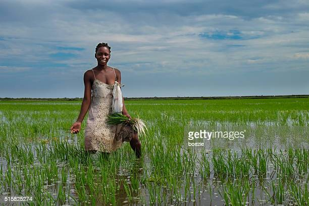 african rice farmer - mozambique stock photos and pictures