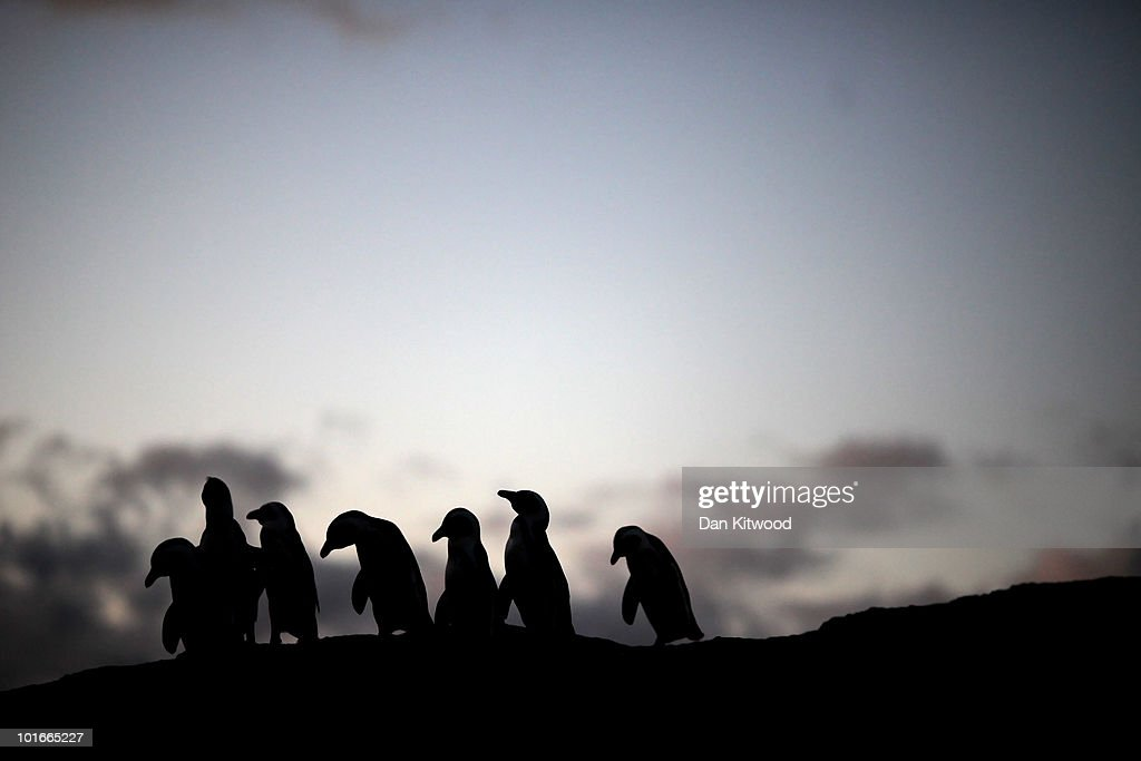 African Rock Hopper Penguins stand on rocks at Boulders Beach on June 6, 2010 in Cape Town, South Africa.