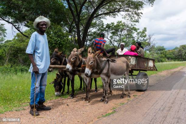 african rural donkey cart victoria falls road zimbabwe - zimbabwe stock pictures, royalty-free photos & images