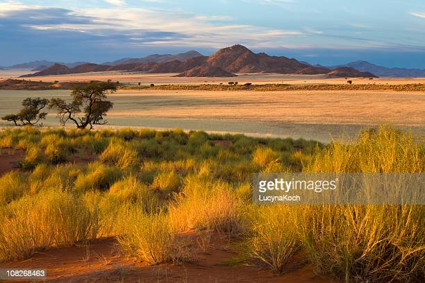 african savannah at sunset - afrika stockfoto's en -beelden