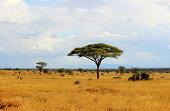 African savannah in Kenya