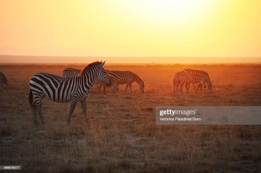 African Sunrise : Stock Photo
