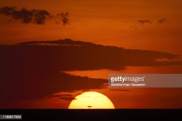 african sunset - night safari stock pictures, royalty-free photos & images