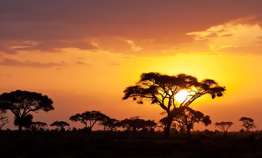 African sunset 596072022