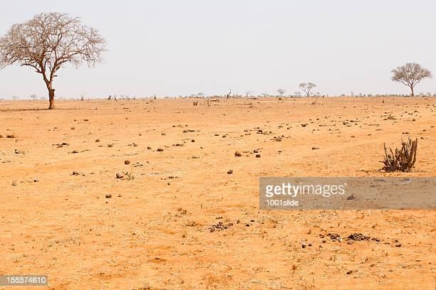 アフリカの砂漠の木