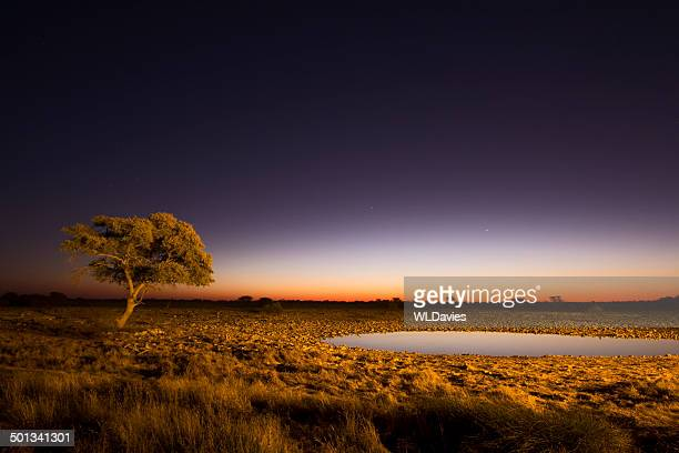 african twilight - mimosa stock pictures, royalty-free photos & images