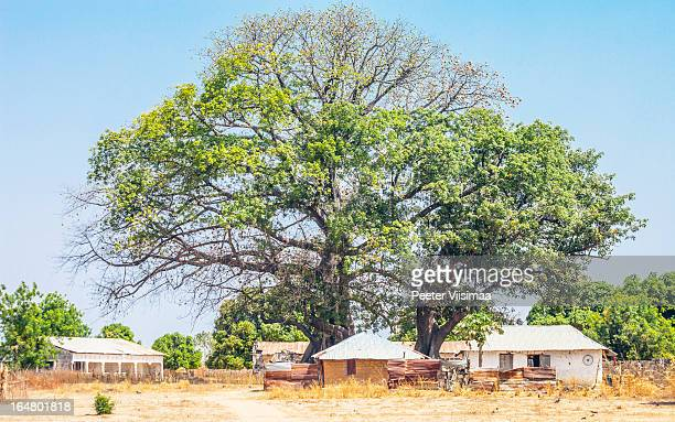 african village. - gambia stock pictures, royalty-free photos & images