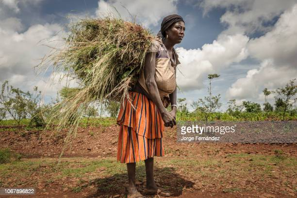African woman carying a heavy load of gras on her back.