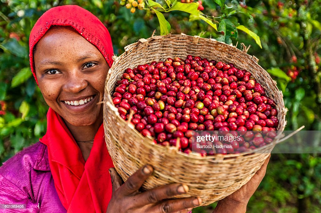 African woman holding basket full of coffee cherries, East Africa : Stock Photo