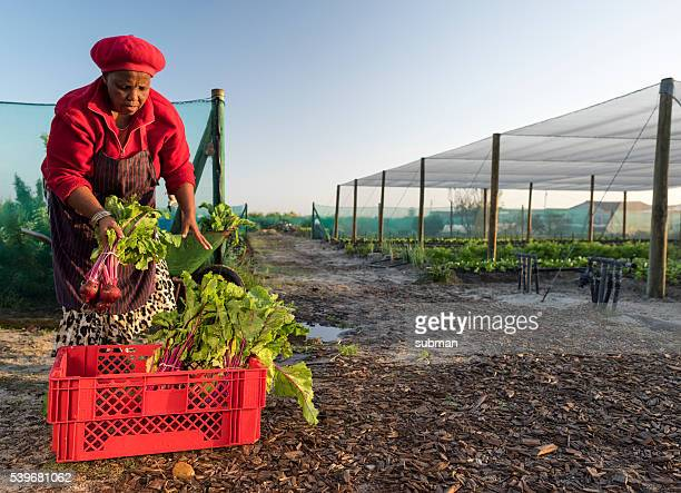 African woman packing crate with vegetables