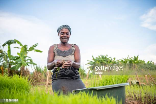 african woman planting rice on field