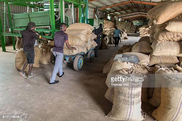 African workers carry sacks with cashew nuts in a warehouse of the MIM cashew processing company on September 07 2016 in Mim Ghana