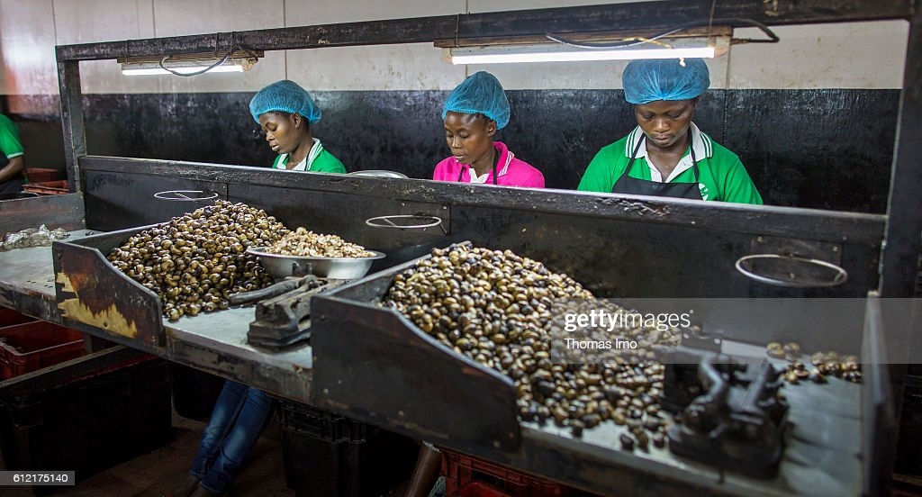media gettyimages com/photos/african-workers-in-th