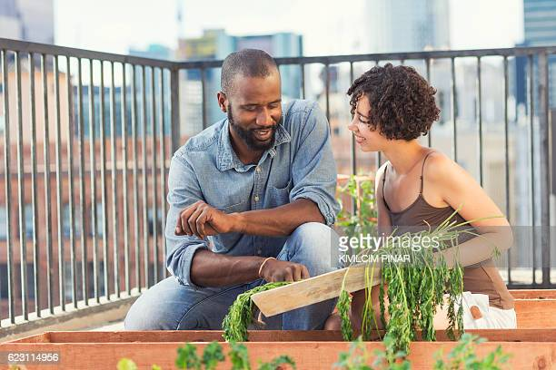African-American couple roof gardening