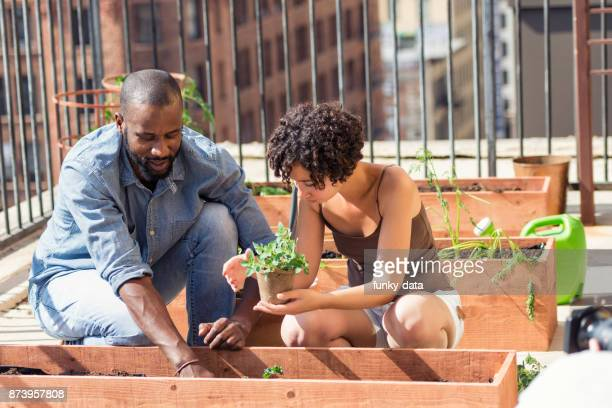 african-american couple roof gardening - urban garden stock pictures, royalty-free photos & images