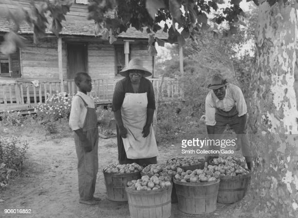AfricanAmerican family of farmers with containers filled with tomatoes standing in front of farmhouse Beau Fort South Carolina USA 1940 From the New...