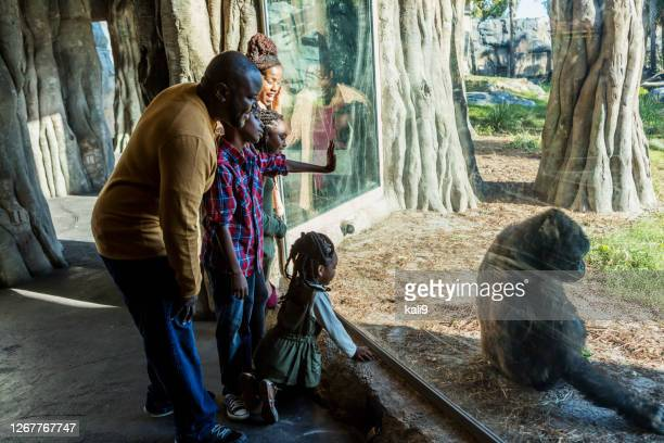 african-american family visiting the zoo - zoo stock pictures, royalty-free photos & images
