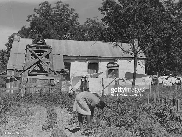 AfricanAmerican woman tends a garden in front of old slave quarters on a plantation Thomastown Louisiana 1940