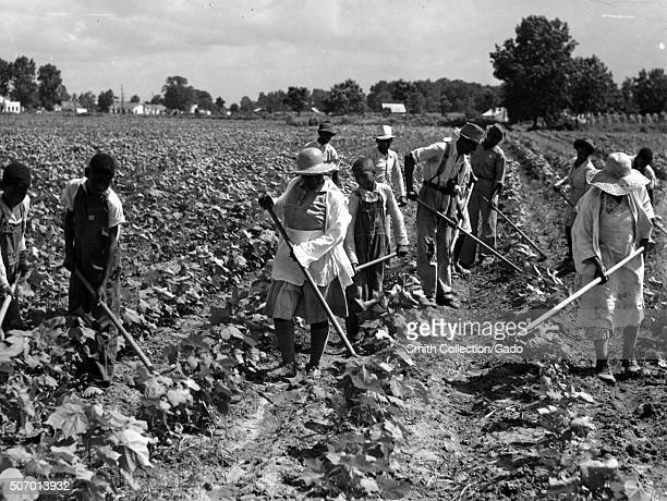 AfricanAmerican workers with hoes tending to crops at Bayou Bourbeaux Plantation operated by Bayou Bourbeaux Farmstead Association a cooperative...